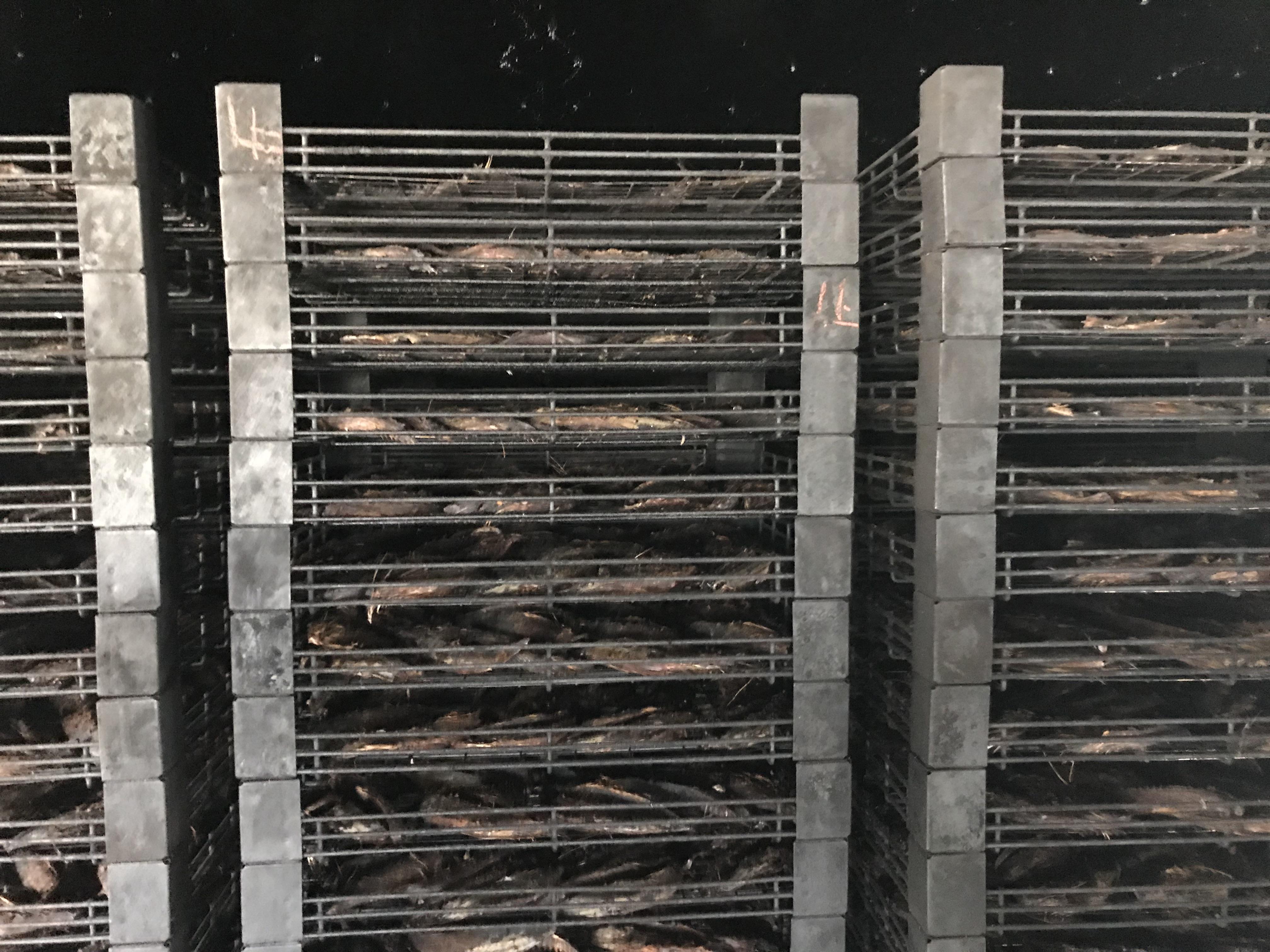 鰹をセイロに並べ乾燥室へ