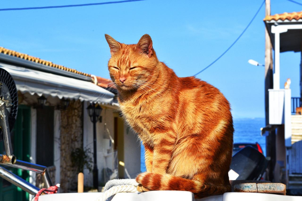 猫 海の見える町