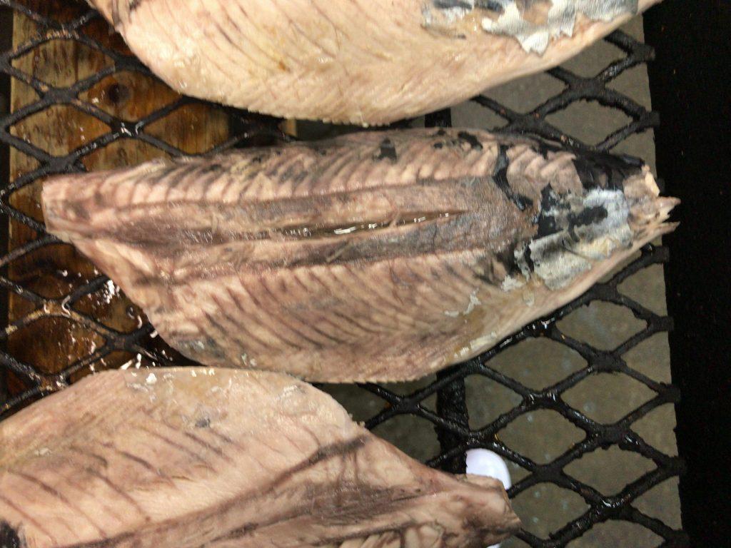 骨とヒレ、皮をむいた鰹(亀節状態)