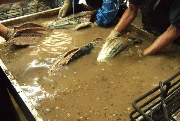 水の中で鰹節を浮かせる