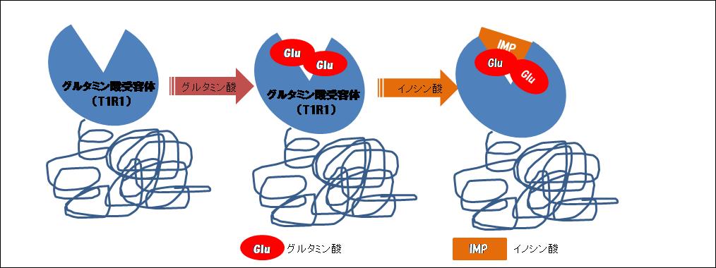 グルタミン酸×イノシン酸の仕組み