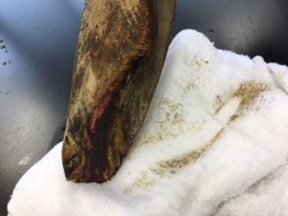 削る部分を濡れた布巾で蒸らす