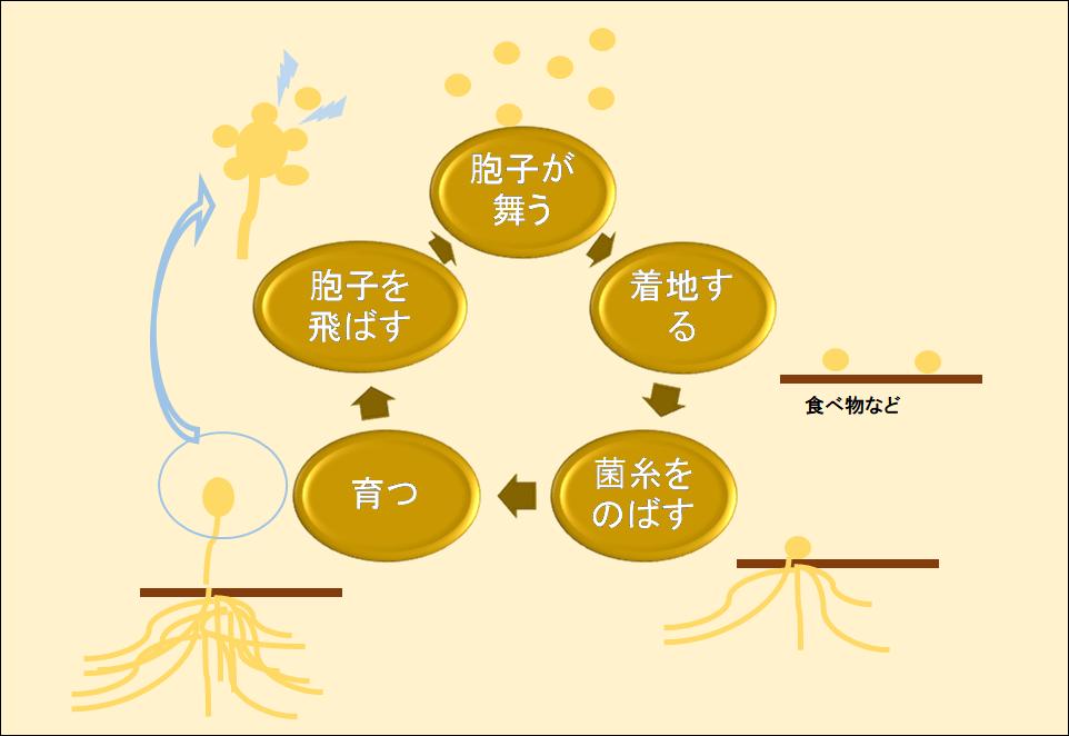 カビのサイクル