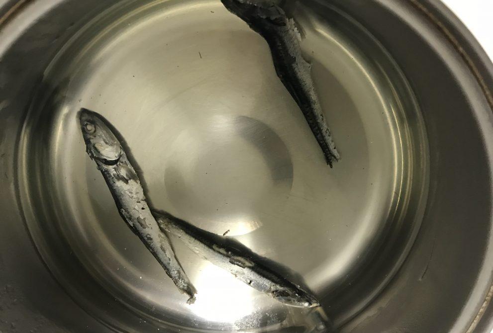 煮干しを水につける