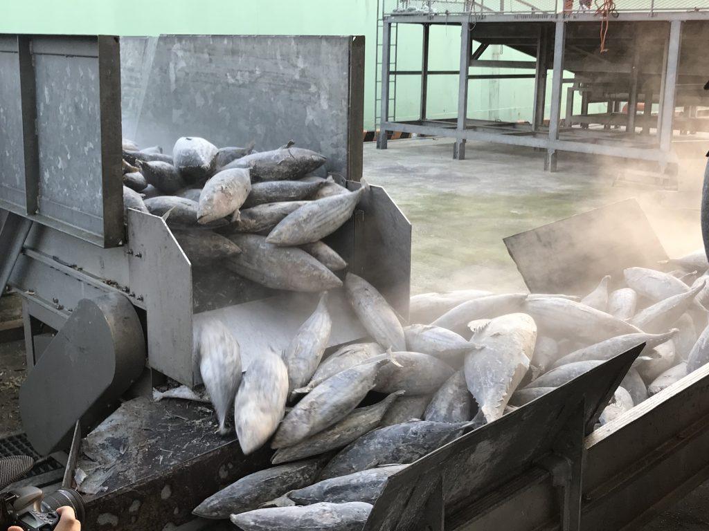 ブライン凍結で急速冷凍された鰹の水揚げ