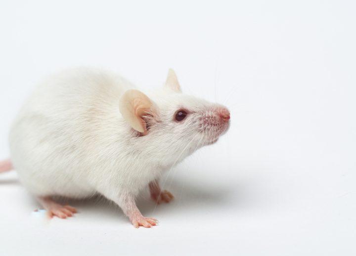 グルタミン酸ナトリウム 危険