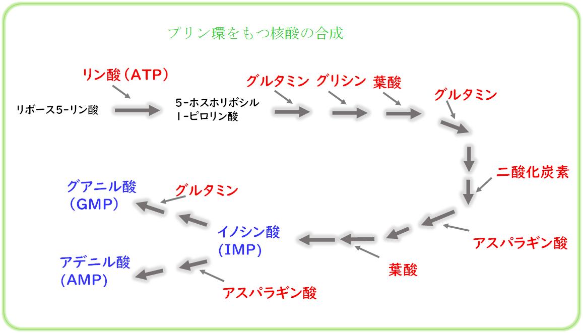 核酸の合成にイノシン酸